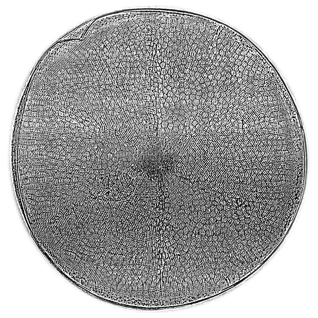 The silica shell of the diatom Actinoptychus senarius, measuring only 0.1 mm across