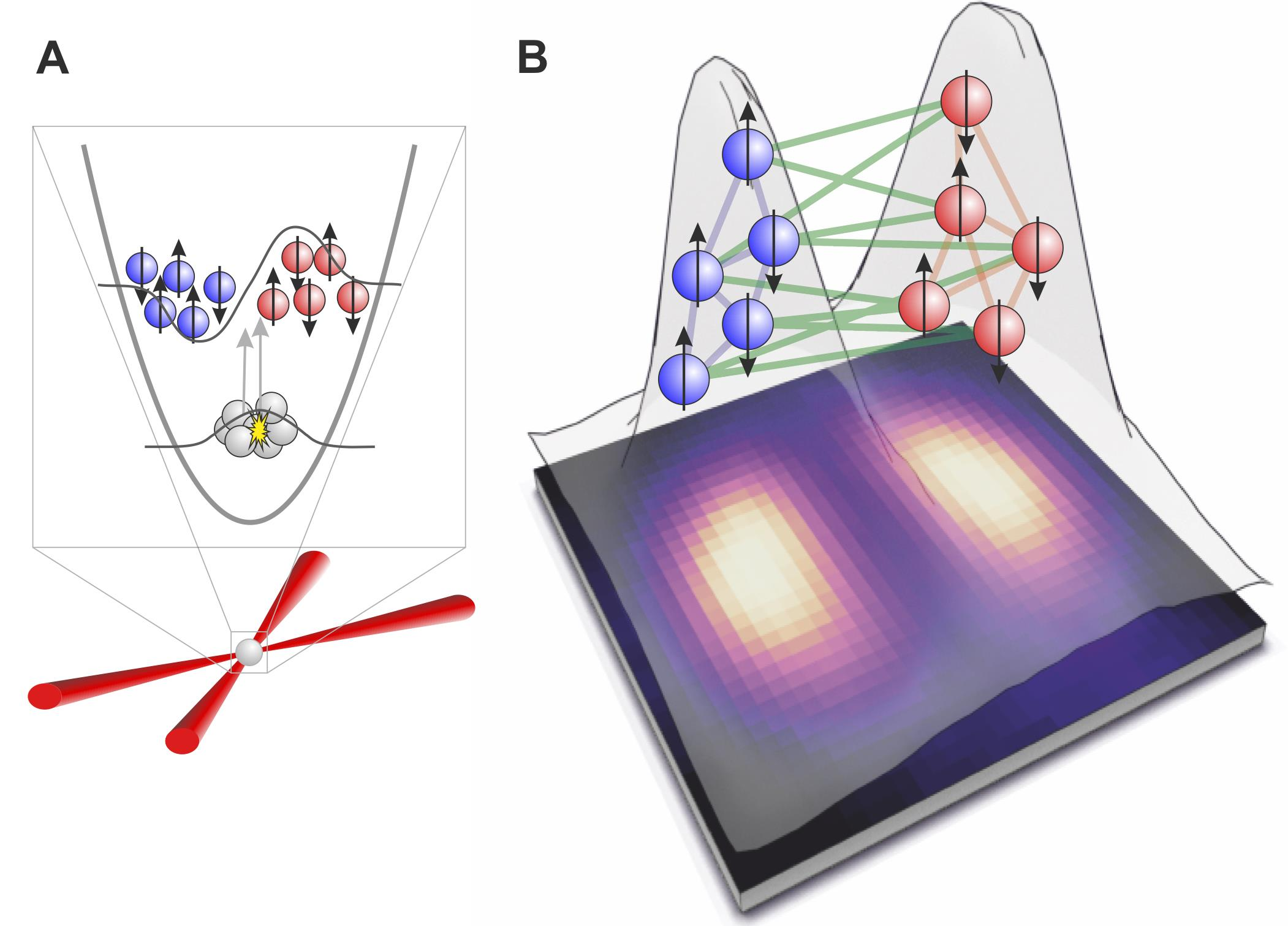 Illustration of the quantum entanglement achieved between the two clouds of atoms starting from a single Bose-Einstein condensate